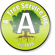 Tree Trimming & Care Service Minneapolis | Arborist Minnesota