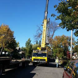 Tree Care Association Maintained Property MN